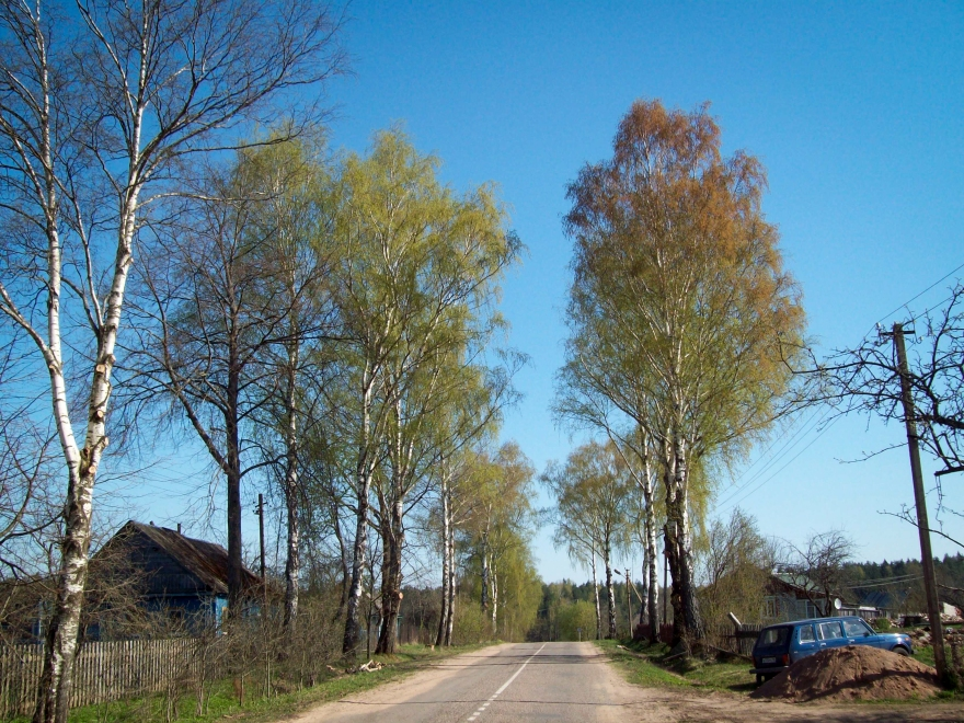 Road in the Pushkinskiye Gory
