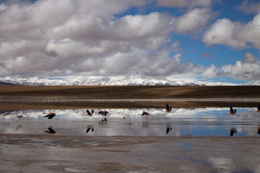 Flamingos, SW Bolivia