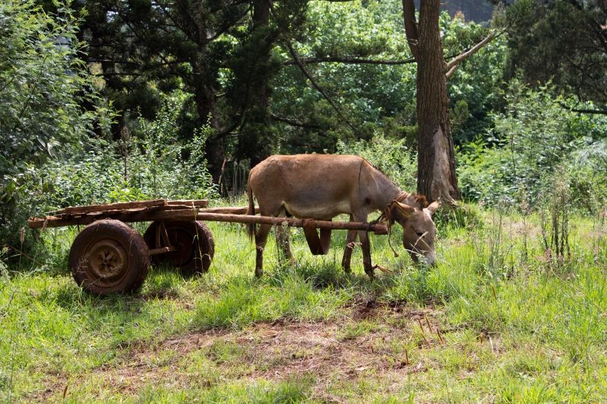 Donkey Cart, Kenya