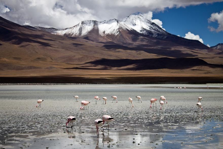 Flamingos, Laguna Honda, Bolivia