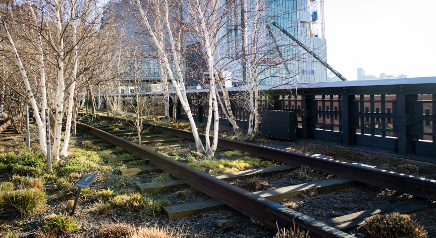 Birches on the High Line, NYC