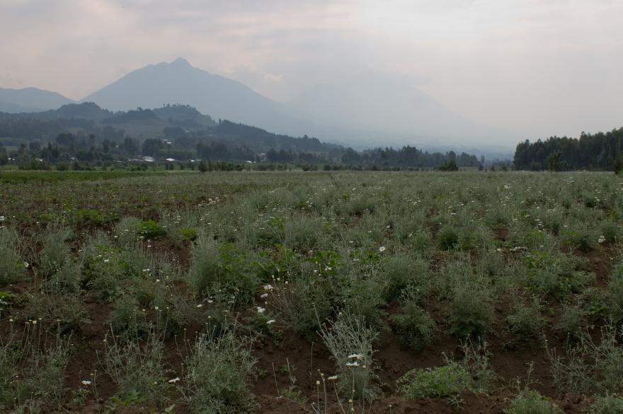 Morning in the Virungas