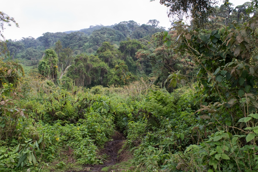 Path up Bisoke