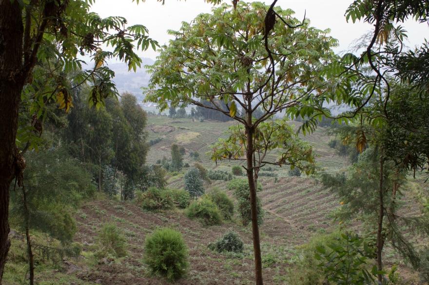 Farmlands by Bisoke