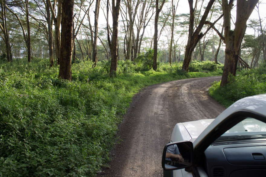 Driving in Lake Nakuru National Park