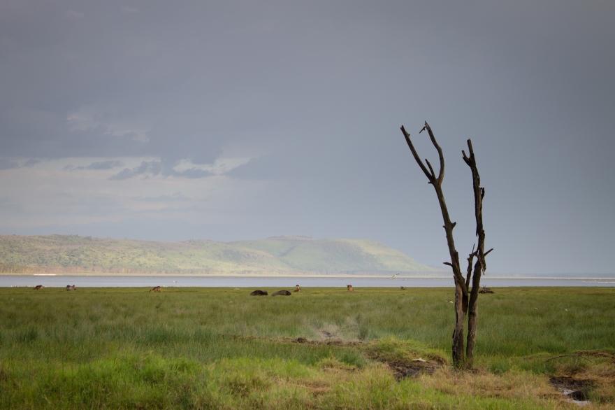 Dead Tree by Lake Nakuru