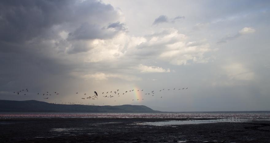 Rainbow over Lake Nakuru