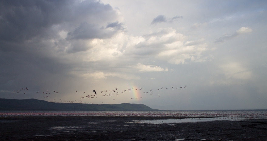 Rainbow over Lake Nakuru
