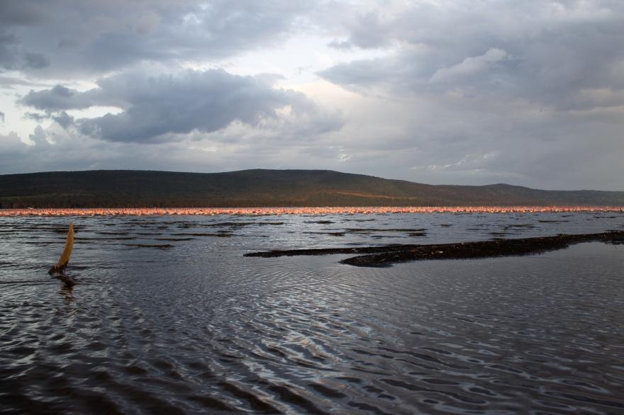 Ripples on Lake Nakuru