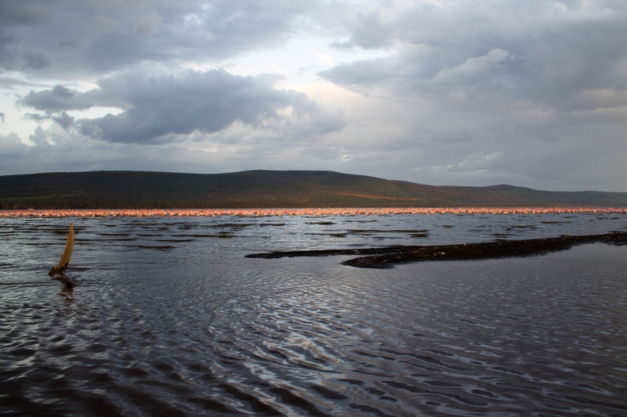 Ripples on Lake Nakuru