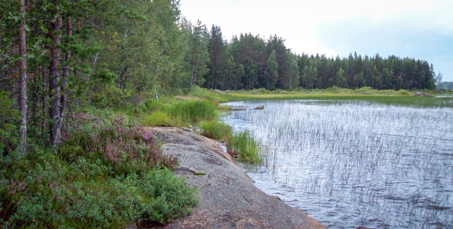 Finnish Wilderness