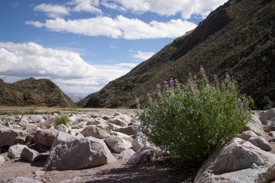 Valley Near Chicon Glacier, Peru