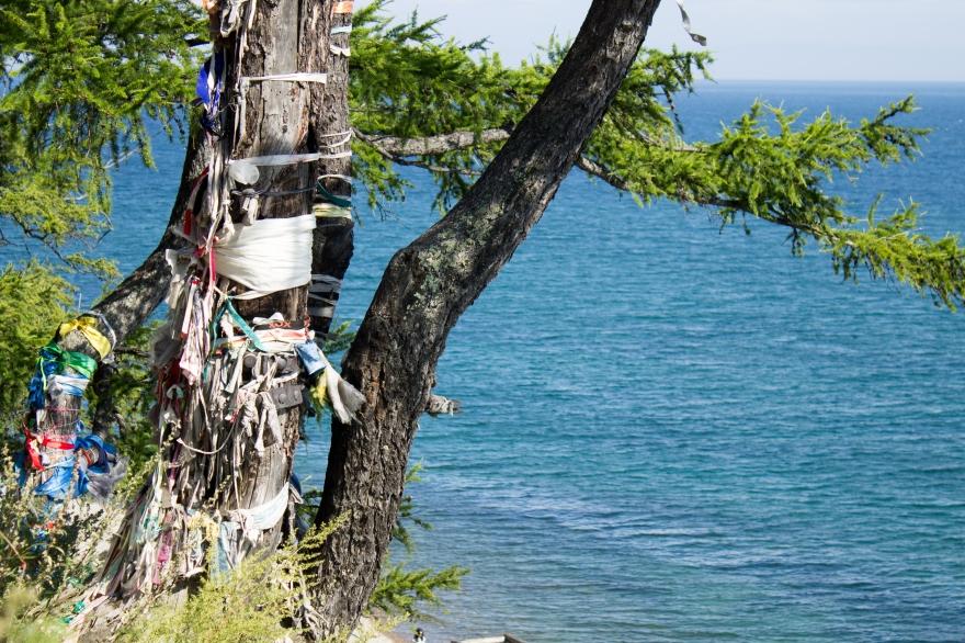 Tree by Lake Baikal