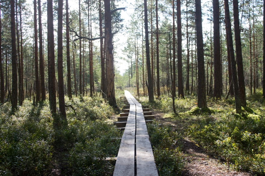 Path into Viru Bog