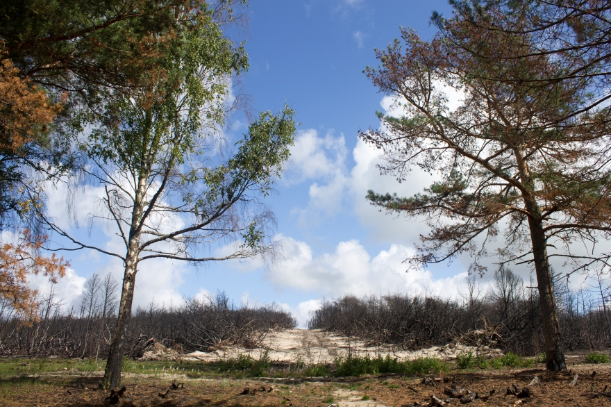 Path through Burnt Forest, Curonian Spit