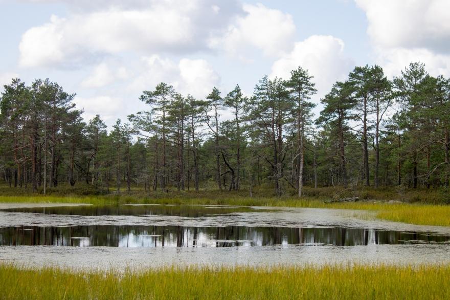 Pond, Viru Bog