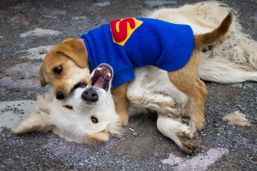 Malata Dogs