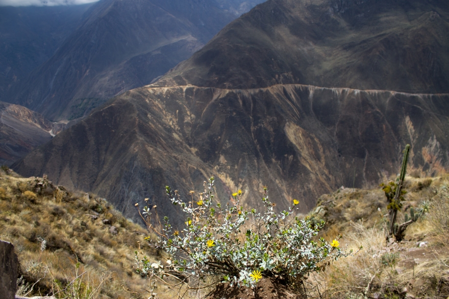 Hiking out of Colca
