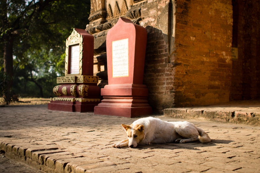 Bagan Temple Dog