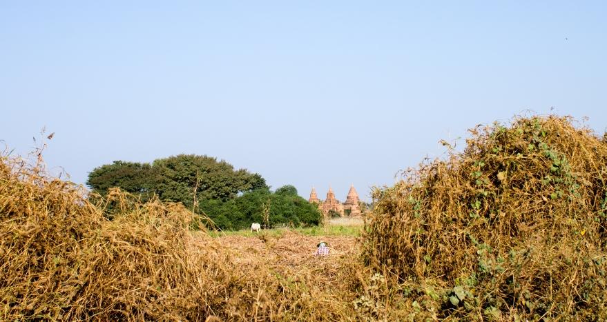 Bagan Farming