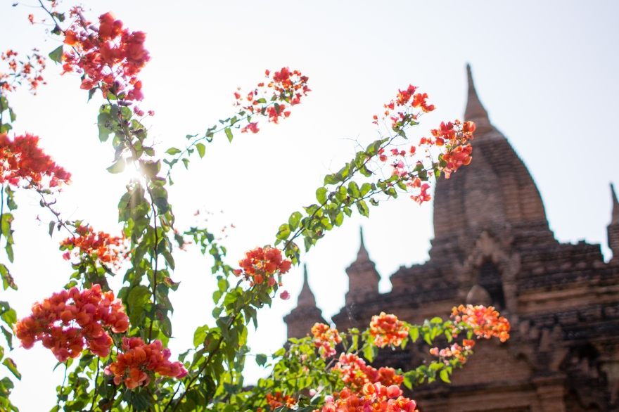 Flowers and a Temple, Bagan