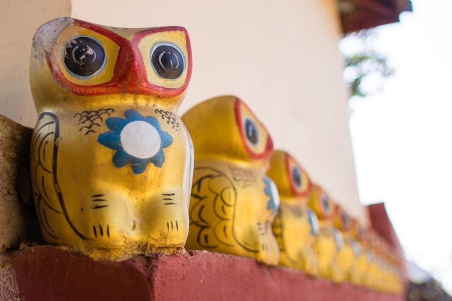 Myanmar Owls