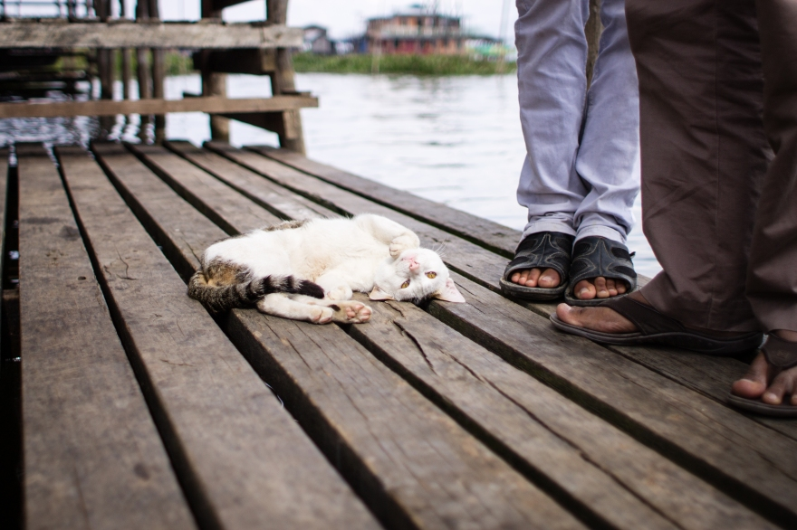 Jumping Cat Lake Inle