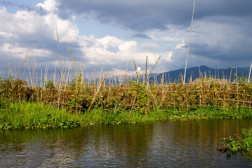Floating Gardens Lake Inle