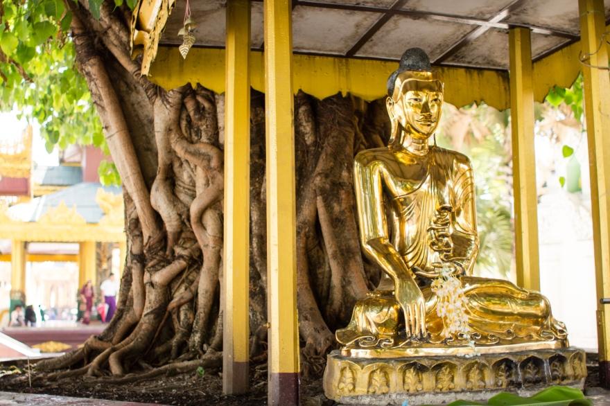 Buddha in Shwedagon