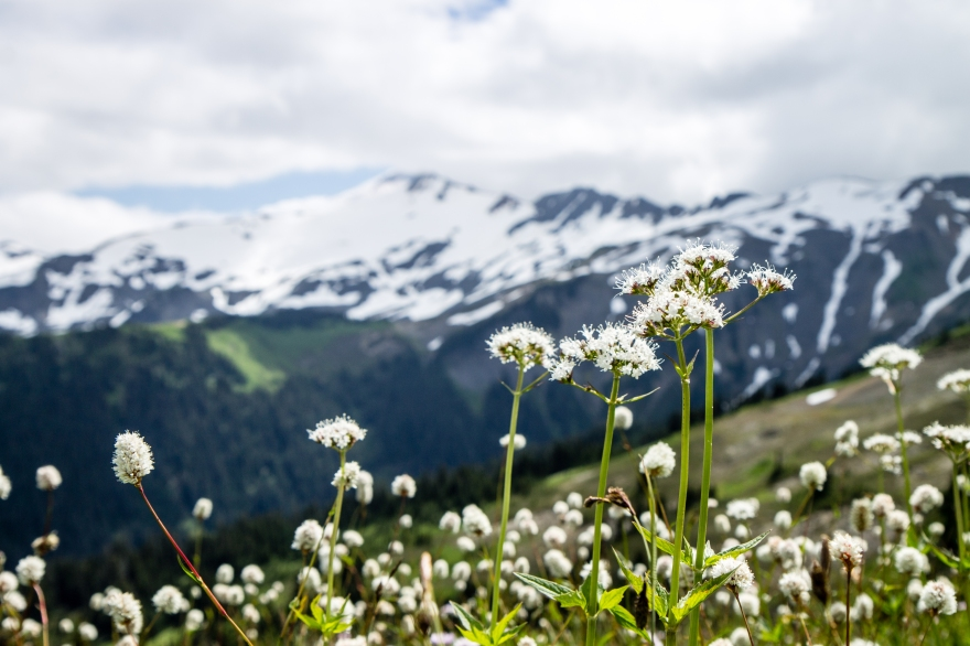 White Flowers White Mountains, Skyline Divide
