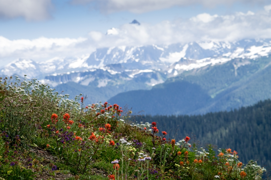 Flowers Atop Skyline Divide