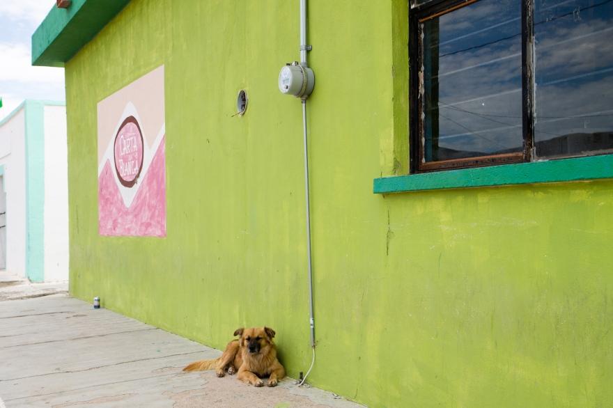 Boquillas Dog