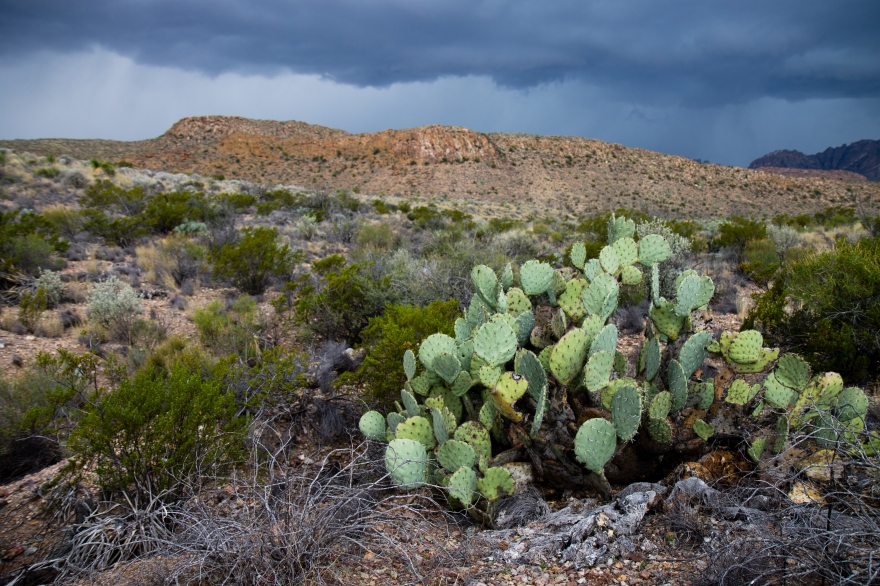Cactus and Distant Rain
