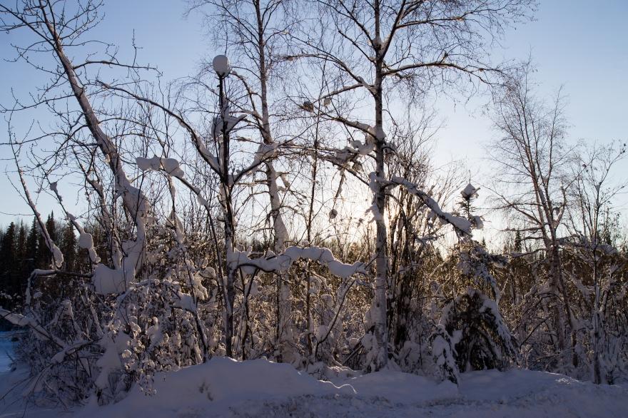 Snow Trees Low Sun