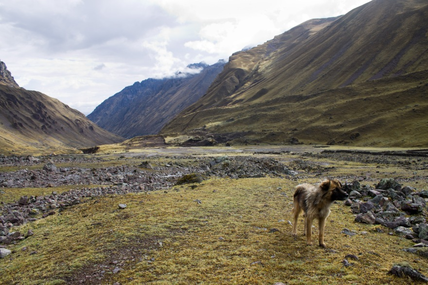 Cancha Cancha Dog, Peru