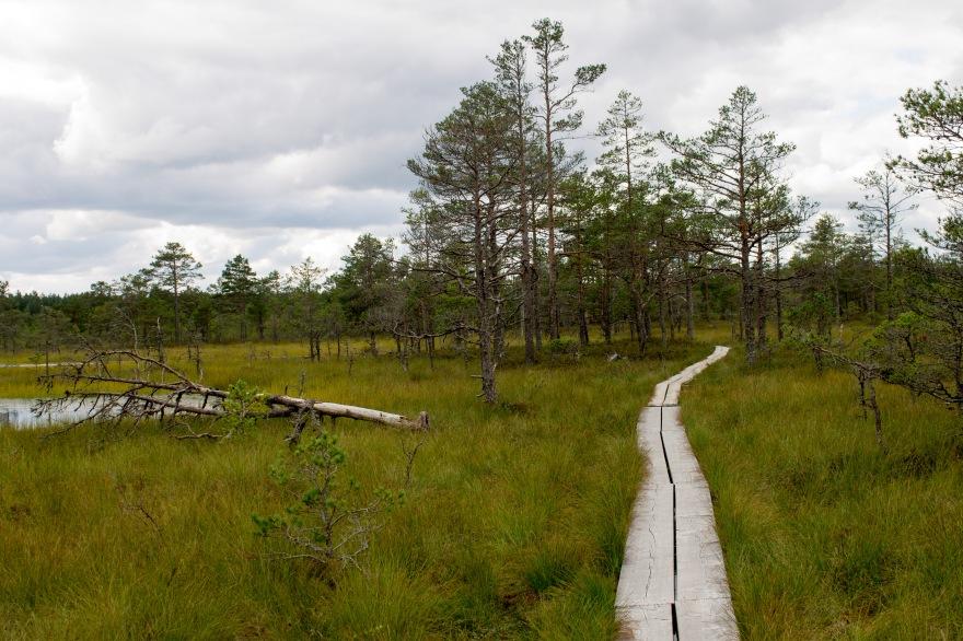 Viru Bog Trail