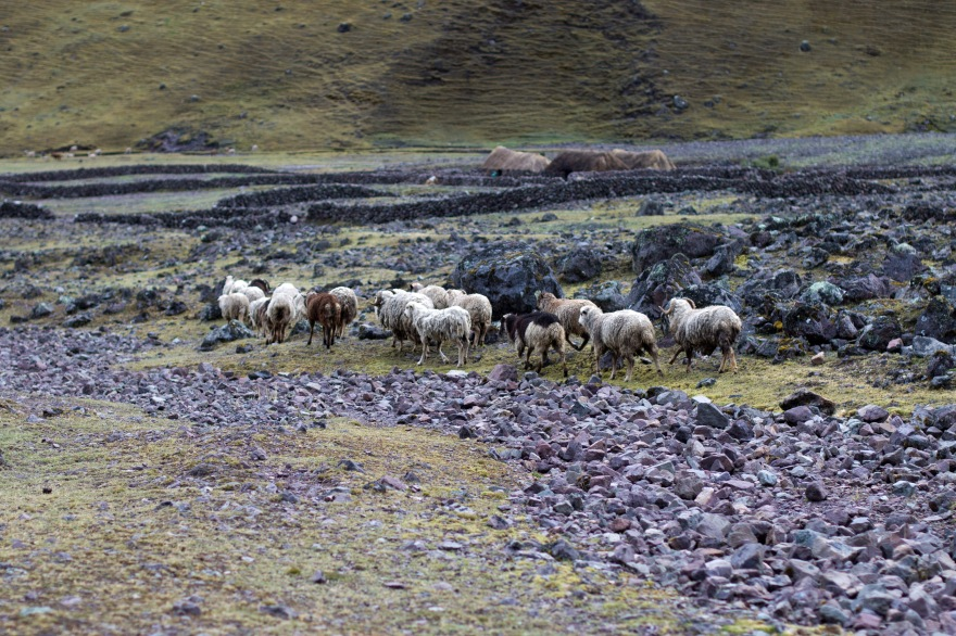 Cancha Cancha, Peru