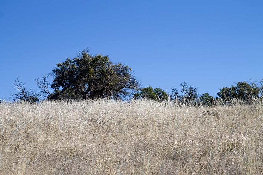 Meadow Near South Rim
