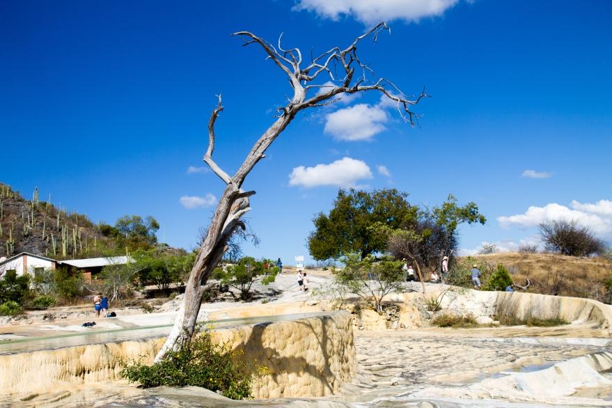 Hierve el Agua Tree