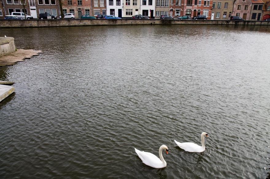 Bruges Swans