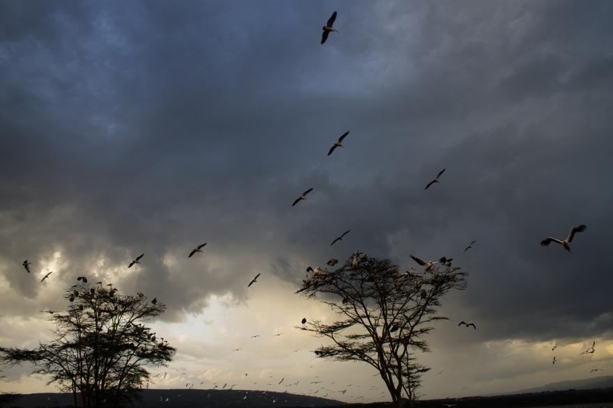 Sunset at Lake Nakuru